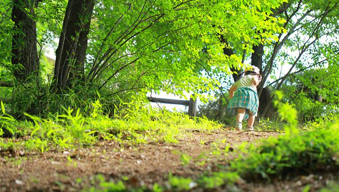 新潟への帰郷の画像